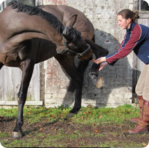 Physio for Horses 1